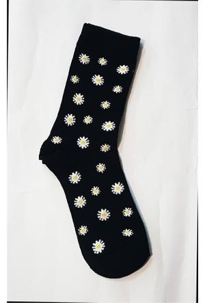 Köstebek Papatya Siyah Kadın Çorap