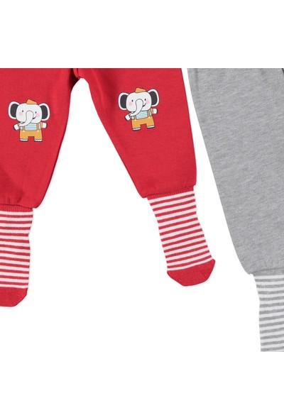 HelloBaby Baskılı 2'li Çoraplı Pantolon