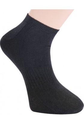 Viridi Vanda Erkek 3'lü Patik Çorap