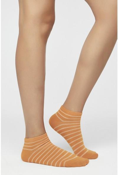 Penti Çok Renkli Fruits 3'lü Patik Çorap