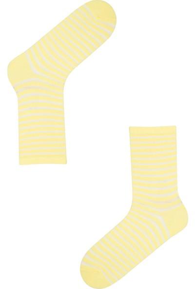 Penti Çok Renkli Stripes 3lü Soket Çorap