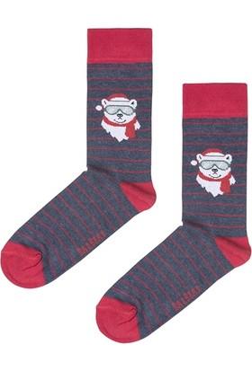 Bad Bear Scout Çivit Mavi Uzun Çorap