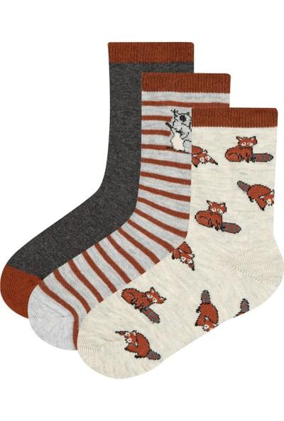 Penti Çok Renkli Erkek Çocuk Racoon 3lü Soket Çorap