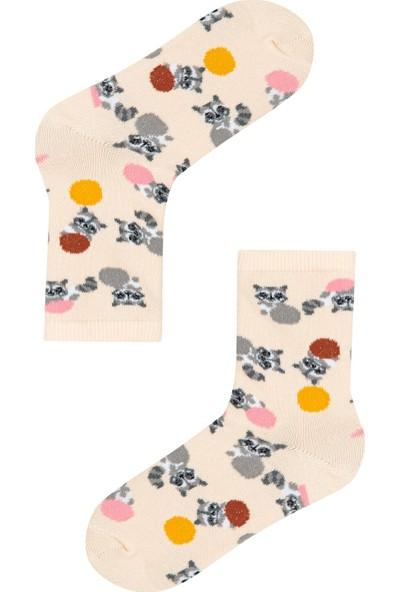 Penti Çok Renkli Kız Çocuk Raoon 4'lü Soket