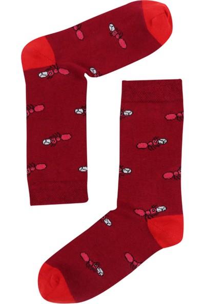 The Socks Company 3'lü Paket Desenli Kadın Çorap