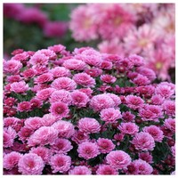 Artikel Çiçek Bahçesi