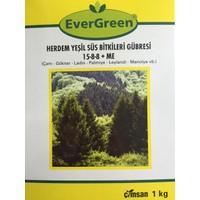 Evergreen Herdem Yeşil Ağaç Ve Çalılar İçin Fidan Gübresi