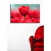 TabloModern Kırmızı Lale Kanvas Tablo 45x70 cm
