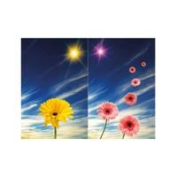 ARTİKEL Stars 2 Parça Kanvas Tablo 80x100 cm KS-534