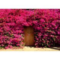 Fotocron Red Flowers Door Tablo