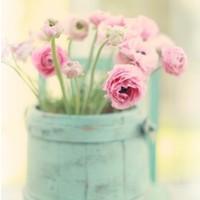 Fotocron Dekoratif Tablo Saksıda Çiçekler