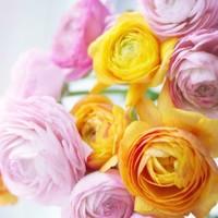 Fotocron Dekoratif Tablo Sarı Pembe Çiçekler
