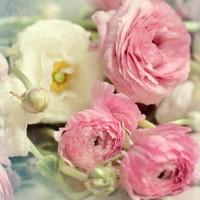 Fotocron Dekoratif Tablo Pembe Beyaz Güller