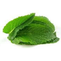 İri Yapraklı Yeşil Saksılık Nane Fidesi(2 adet)