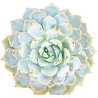 Fotocron Mavi Çiçek Tablo
