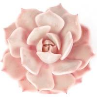 Fotocron Soft Renk Çiçek Tablo
