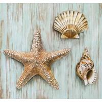 Fotocron Deniz Taşları Tablo