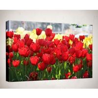 Kanvas Tablo - Çiçek Resimleri - C43