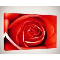 Kanvas Tablo - Çiçek Resimleri - C263