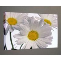 Kanvas Tablo - Çiçek Resimleri - C279