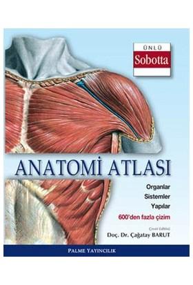 Anatomi Atlası Ünlü Sobotta Çizimleri