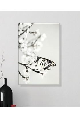 Arse Dalda Kelebek Dekoratif Kanvas Tablo 50x70 cm