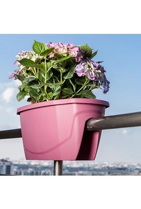 Mini Garden Zümrüt Balkon Saksısı Büyük Vişne