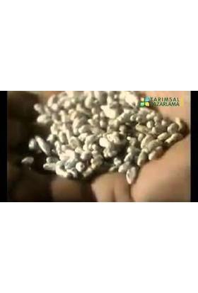 Mantarcı Anne Kültür Mantarı Tohumu 100 gr Beyaz Şapkalı Mantar Miseli 500 grm Torf Hediye