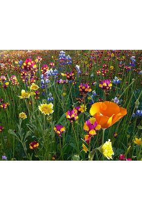 Tohhum Karışık Kır Çiçekleri 1000+ Tohum [Tohhum Ev Bahçe]