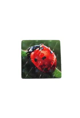 Myros Myros Uğur Böceği Temalı 3 Boyutlu Magnet