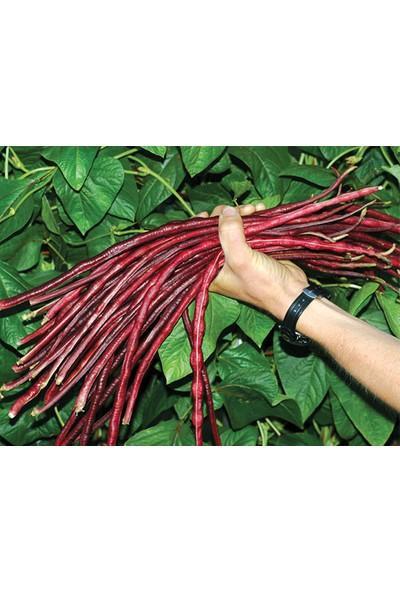 Tohhum Kırmızı Uzun Fasulye Tohumu [Tohhum Ev Bahçe]