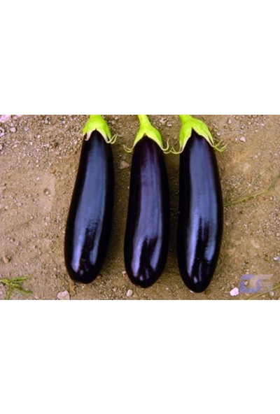 Tohhum Aydın Siyah Patlıcanı [Tohhum Ev Bahçe]