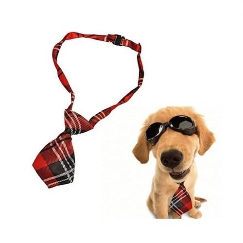 BuldumBuldum Kravat Şeklinde Köpek Tasması