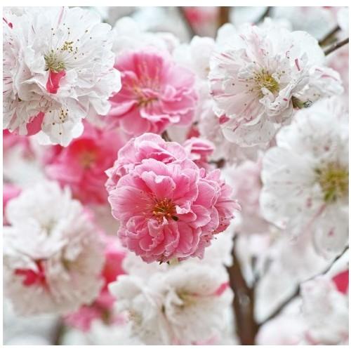 Fotocron Dekoratif Tablo Pembe Beyaz Çiçekler