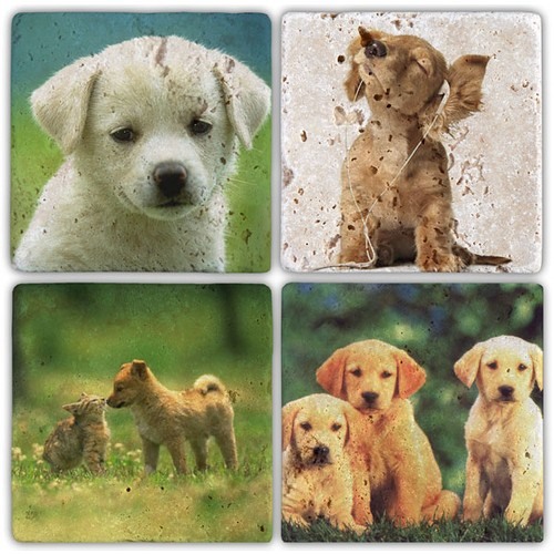 Oscar Stone Dogs Bardak Altlığı