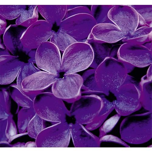 Fotocron Mor Çiçekler-2 Tablo