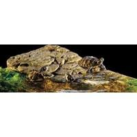 Hagen Exo Terra Turtle Bank Kaplumbağa Adası (L)