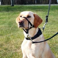 Trixie Top Trainer Uzman Köpek Eğitim Tasması L-Xl 37 Cm