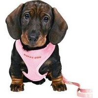 Trixie Yavru Köpek Tasmakayiş,23-34Cm - 2M - 10Mm