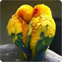 Fotografyabaskı Aşık Kuşlar Bardak Altlığı Baskı 4'lü Set