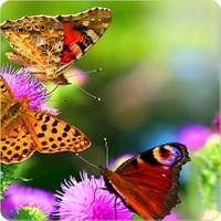 Fotografyabaskı Kelebekler Bardak Altlığı Baskı 4'lü Set