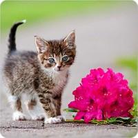 Fotografyabaskı Kedicik Bardak Altlığı Baskı 4'lü Set