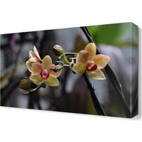 Dekor Sevgisi Küçük Güzel Çiçek Tablosu 45x30 cm
