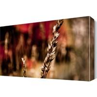 Dekor Sevgisi Başak Canvas Tablo 45x30 cm