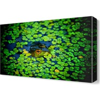 Dekor Sevgisi Kurbağa Canvas Tablo 45x30 cm