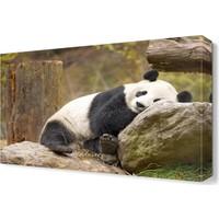 Dekor Sevgisi Panda Canvas Tablo 45x30 cm