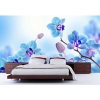 Mavi & Mor Orkide 001 Duvar Sticker 350x250cm
