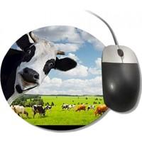 Fotografyabaskı Komik İnek Kameraya Bakarken Yuvarlak Mouse Pad
