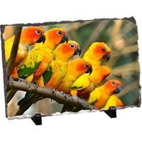Fotografyabaski Papağanlar Dikdörtgen Taş Baskı 15X20 Cm