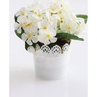 Yapay Çiçek Deposu Dantelli Plastik Saksıda Menekşe Çiçeği Beyaz